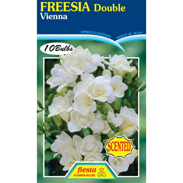 Freesia Double Vienna