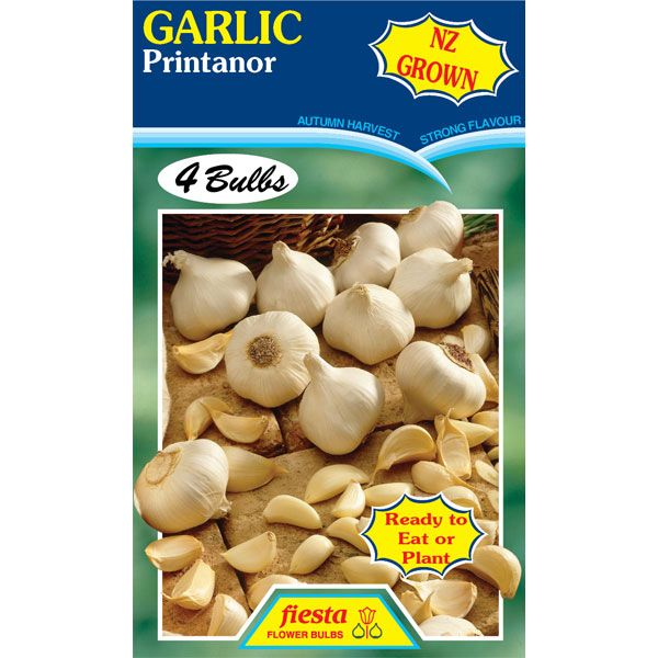 Garlic Printanor